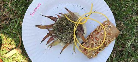 Kids craft: Nest plus seeds on paper roll