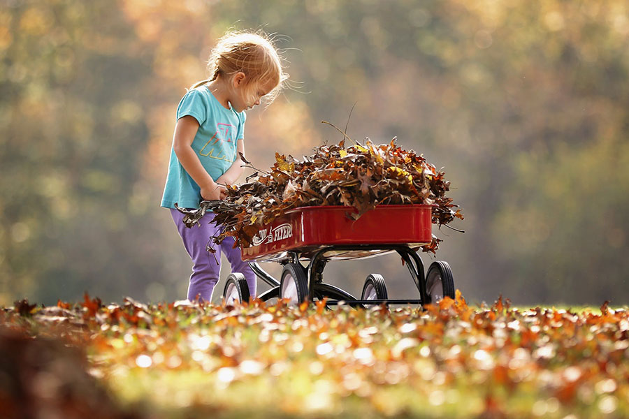 Child pushing cart with autumn leaves