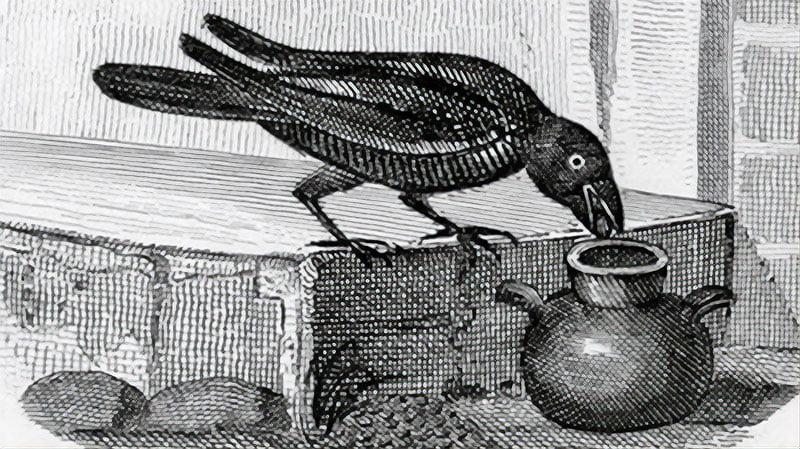 Crow dropping pebbles into a jug