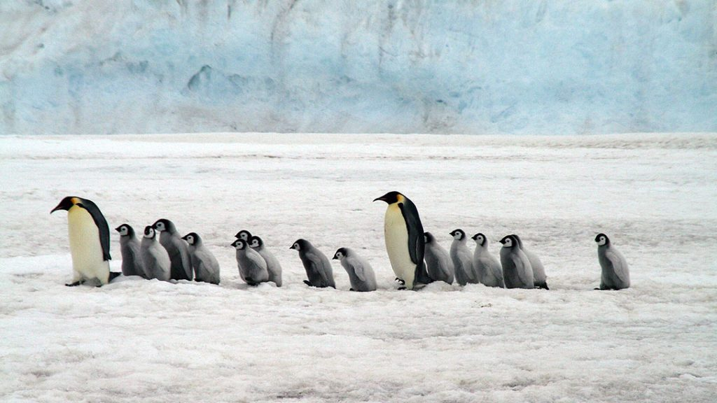 Penguins walking in a line surrounded by snow