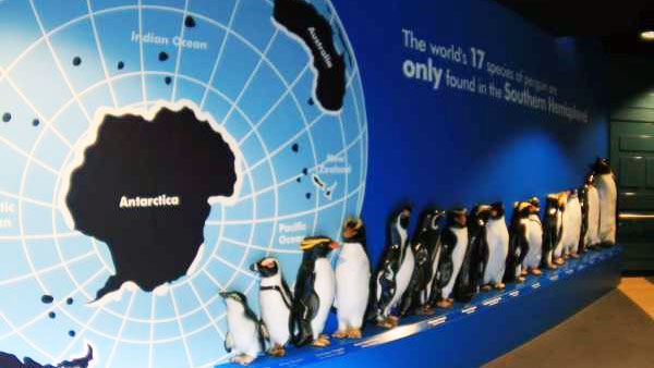 Penguins in a line in front of a map of Antarctica
