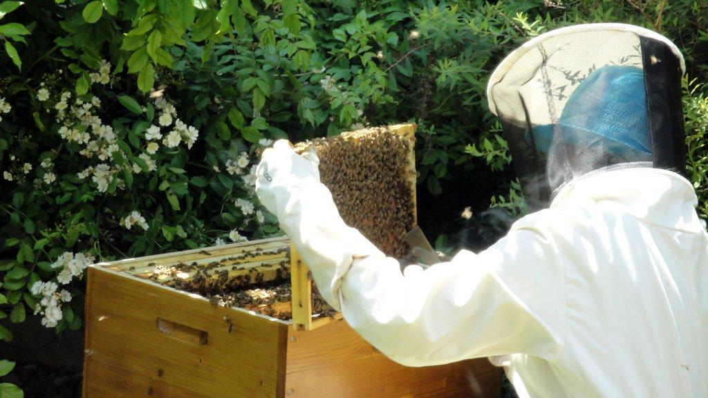 Women looking into bee hive